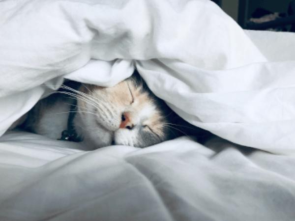 Gli effetti di un buon sonno sulla salute